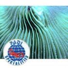 PADI AWARE Coral Reef Conservation